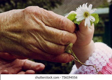 The old grandmother gives the flower to a small child