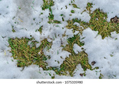 Old grass and melting snow texture background.