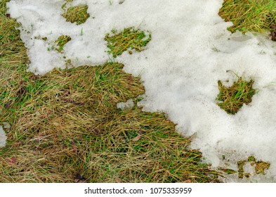 Old grass under the snow.