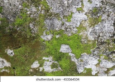 Old gray stone wall with green moss texture background