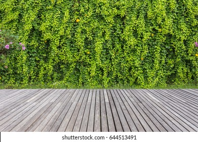 Old grey wooden decking and wall of plant in garden decoration. Free space for design or montage