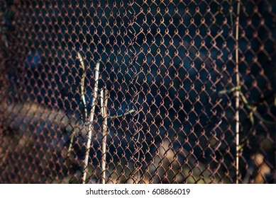 Old grid steel iron metallic rusty fence