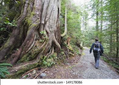 old growth forest in Carmanah Walbran Provincial Park Vancouver Island British Columbia Canada