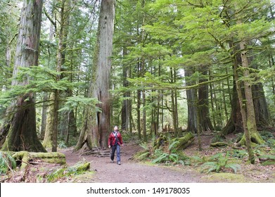old growth forest in Cathedral Grove MacMillan Provincial Park Vancouver Island British Columbia Canada