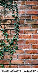Old grunge orange brick wall with little green leaves, vintage background.