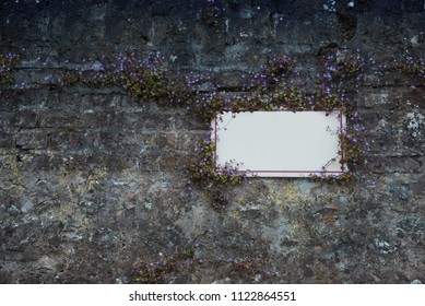 Old grunge wall with violet flowers and place for text. Texture background