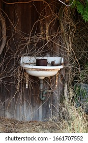 Old Hand Sink Outside with Overgrown Vines