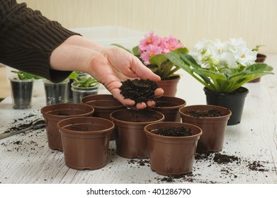 Old hand throws the soil in pot