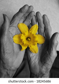 Old hands and beautiful flower