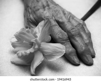 Old hands and the flower