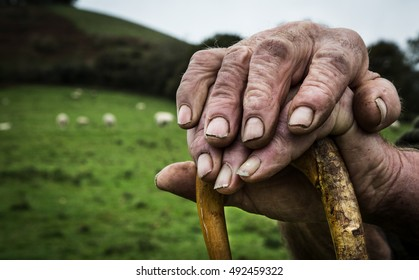 The old hands of a Shepherd resting on his stick.