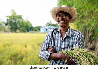 Old happy Thai female farmer harvesting rice in countryside Thailand.