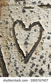 old heart carved into an aspen tree trunk