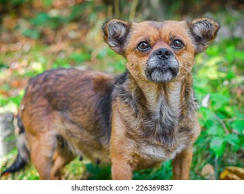 Old Homeless Dog.  Not purebred dog thrown by people