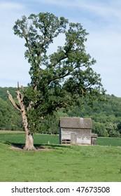 old homestead house under large oak tree