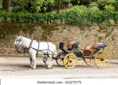 Old horse-drawn carriage with two white horses parked in cobbled street, Sintra, Portugal