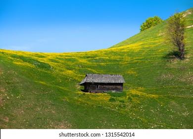 Old house in beautiful spring landscape, dandellion field