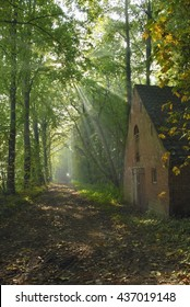 Old house beside a forest path illuminated by the sun