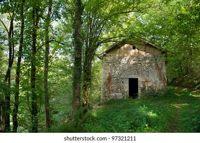Old house in the middle of a forest