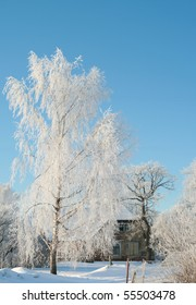 Old house and trees in winter