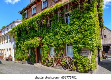 old house with wall overgrown by wild grapes