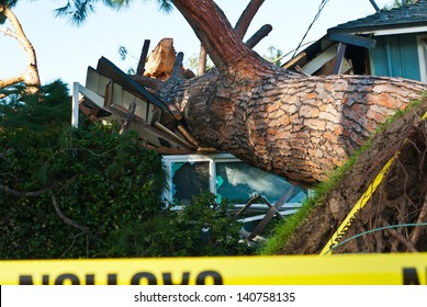 Old huge tree crashes into home due to storm. I hope they have good home insurance.