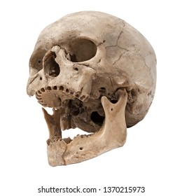 Old human skull bottom view without teeth