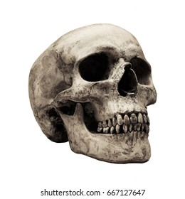 old human skull isolated on white background