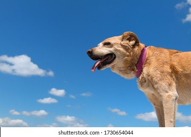 Old hunting dog against blue sky