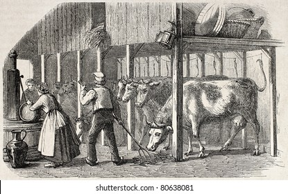 Old illustration Dutch man and woman working in a cowshed. Created by Marc, published on L'Illustration, Journal Universel, Paris, 1857