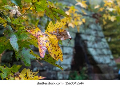 Old iron furnace behind some leaves