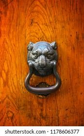 Old kind of lion look a like door knocker on big wooden and very old door
