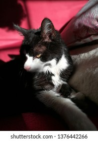 old kitten on red couch