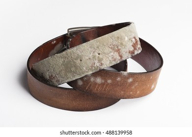 an old leather belt, covered with mold, white isolated closeup