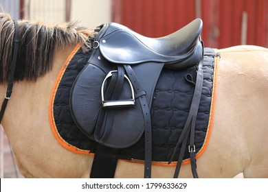 Old leather saddles horse with stirrups on a back of a saddle horse.Close up of a sport horse. Dressage of horses. Equestrian sport event