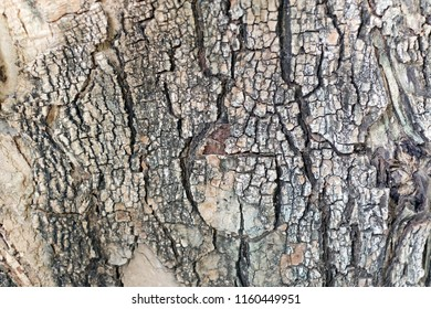 Old Lined Wood