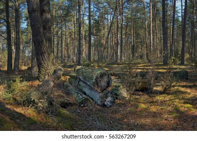 The old log covered with moss, lying in the woods.
