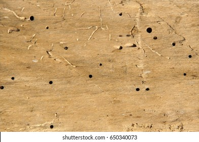 Old log with woodworm holes and burrows created by beatles Anobium punctatum