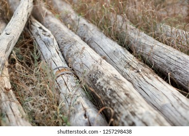 Old logs are gray with wind and salty water, lying in the grass by the sea.