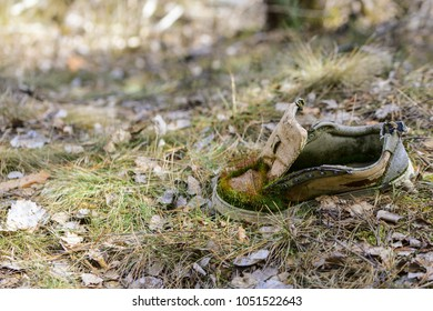 An old lost shoe puts on moss