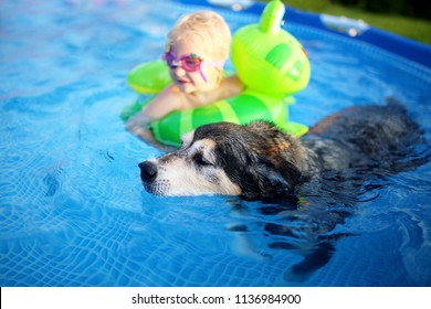 An old, loyal, German Shepherd Mix Breed senior dog is swimming in his shallow backyard above ground swimming pool with his baby girl, who is in goggles and a float.