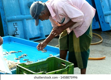 Old man is choosing shrimps at the local fish market in Hikkaduwa in Sri Lanka on March 2019.