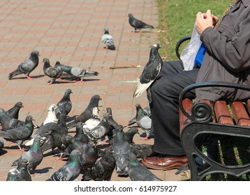 the old man feeding the pigeons