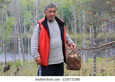 old man gathers mushrooms in the forest