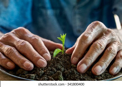 The old man hand holding Seedling, for care and Seeding,new life concept.