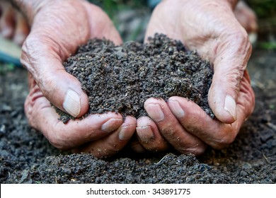 The old man hand holding soil, Organic plant fertilizer on hand for plantation