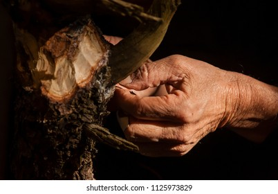 Old man hand working on bonsai tree wood
