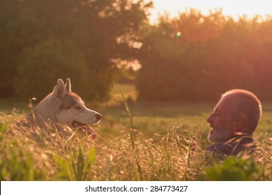 old man with his dog in a field at sunset. Close-up portrait. Siberian husky.