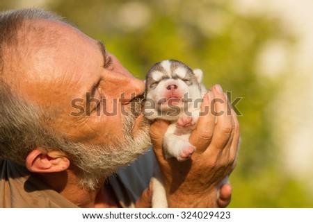 Old Man Kisses Newborn Puppy Huskies Stock Photo Edit Now