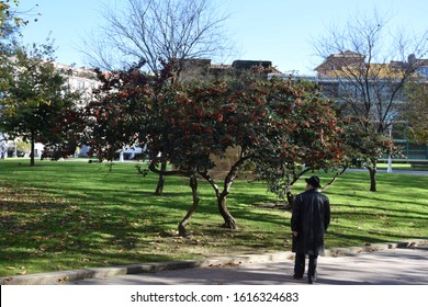 An old man from staring at a tree in a parc